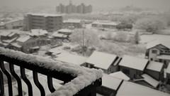 ✪朝 目が覚めれば雪景色…自宅にて (m-miki) Tags: nikon d610 japan 犬山 愛知 雪 雪景色 冬 朝 白黒 b&w
