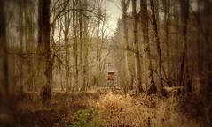 _hibernation (SpitMcGee) Tags: winterschlaf hibernation frühling spring hochstand wald forest spitmcgee explore 48