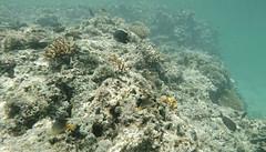 Snorkeling w oceanie | Snorkeling in the ocean