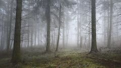 In The Silence (Russ Barnes Photography) Tags: winter fog woodland dawn woods nikon cotswolds russbarnes d800e zeiss25mmf2zf2