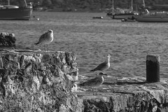 Three seagulls (martinapedrazzi) Tags: sea seagulls mare gabbiani