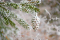 Frohe Weihnachten! Merry Christmas! (balu51) Tags: tanne tannenzapfen weihnachtsschmuck weihnachten silbrig grün weiss reif grüneweihnachten christmas chirstmasdecoration pinecone silver white green 100xthe2016edition 100x2016 image95100 dezember 2016 copyrightbybalu51
