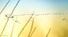 Nouveau passage de grues. (Crilion43) Tags: réflex france véreaux divers ciel grues paysage centre oiseaux canon nuages tamron 1200d cher objectif bleue cendrée charbonnière mésange nature