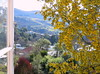 Spring Gold ( Spring 2016 ) (Snorkle-suz) Tags: window view hills tree spring kowhaiflowers golden yellow windowframe newzealand nz aotearoa holiday plant nature canonpowershotsx700hs