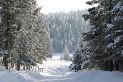Raven Hoar Frost (Rock Water) Tags: snow road larch fir hoarfrost frost montana