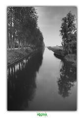 FOR TIME FEELERS (régisa) Tags: retranchement zwinstraat zeeuwsvlaanderen zeeland zélande flandre zélandaise tree arbre nederland alignment alignement canal eluvium