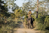 An elephantine conversation (Shubh M Singh) Tags: kaziranga elephant mahout india assam
