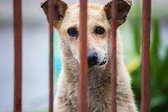 Mandibula (Alejandro...) Tags: perro abandonado callejero mandibula