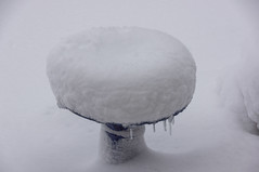 Bird Bath (Richtpt (Rich Uchytil)) Tags: 2017 oregon pdx portlandor birdbath january snow winter portland unitedstates us