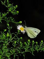 Ricordi d'estate....... (ilfotografodellapausapranzo1) Tags: summer estate ricordidestate butterfly farfalle natura nature lovesnature amazingnature