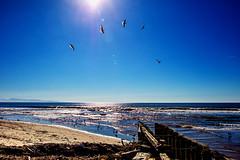 Smarter than Icarus. (drpeterrath) Tags: canon eos5dsr 5dsr santacruz aptos california ca pacificocean beach color landscape seascape outdoor blue sky sun bird