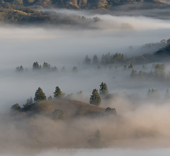 Sonoma Stew (Bob Bowman Photography) Tags: fog morning sunrise california northerncalifornia sonomacounty trees hills light