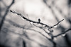 icy morning (Eric Baggett) Tags: ice nature mothernature winter icy stlouis saintlouis missouri quiet branch tree sonya7rii bnw blackandwhitephotography blackandwhite bwphotos monochrome noiretblanc light ericbaggett bentonpark
