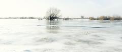 ice (Rambynas) Tags: lithuania lietuva landscape winter ice flood rambynoregioninisparkas