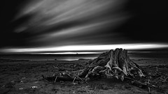Hostile (jarnasen) Tags: d810 nikon 1635mmf4 longexposure leefilters le nd15 superstopper bnw mono monochrome blackandwhite sky black mood moody driftwood beach tree log roxen kungsbro dark darkness dawn processed copyright järnåsen jarnasen sweden sverige landscape nordiclandscape landskap lake lakescape nature östergötland outdoor motalaström scandinavia dof perspective view gallery scenery suggestive 4min exposure winter cold