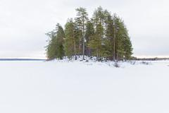 Great Northern Forest in Finland: Pärtösaari, Kuhmo (Greenpeacesuomi) Tags: finland landscape maisema metsä forest greenpeace