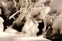 White and Fulfy (Karen McQuilkin) Tags: fluffy snow ice creek karenmcquilkins winter utah stream hike