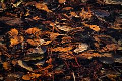Under The Ice (MrBlueSky*) Tags: leaves follage ice frozen kewgardens nature outdoor london texture lake aficionados ngc pentax pentaxart pentaxk1 pentaxlife pentaxawards