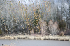 ICM at the lake (Dotsy McCurly) Tags: icm intentional camera movement park lake water weepingwillow tree branches blowing wind windy woods nature beautiful canoneos5dmarkiii nj 600mm