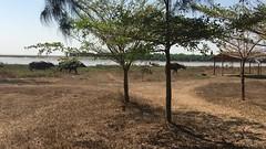 Myanmar, Yangon Region, Southern District, Kungyangon Township, Let Khoke Kone Village Tract (Die Welt, wie ich sie vorfand) Tags: myanmar burma bicycle cycling bike yangonregion southerndistrict kungyangontownship letkhokekonevillagetract yangon rangoon kungyangon letkhokekone letkokkon buffalo waterbuffalo