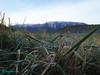 Brina in collina - sullo sfondo il Morrone - Abruzzo