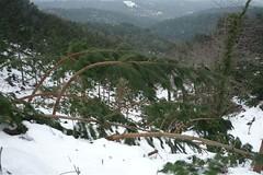 "Dany nevades 8 de març Tordera <a style=""margin-left:10px; font-size:0.8em;"" href=""http://www.flickr.com/photos/134196373@N08/19690529504/"" target=""_blank"">@flickr</a>"