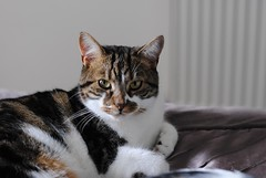 Brian the cat 3 (zawtowers) Tags: cute home comfortable cat happy 50mm feline soft looking brian relaxing adorable kitty posing content relaxed kittie snuggly fifty afsnikkor50mmf18g