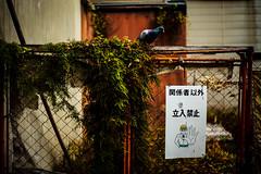 20161129-L1000220 (Mac Kwan) Tags: leica travel japan kyoto m240 color street