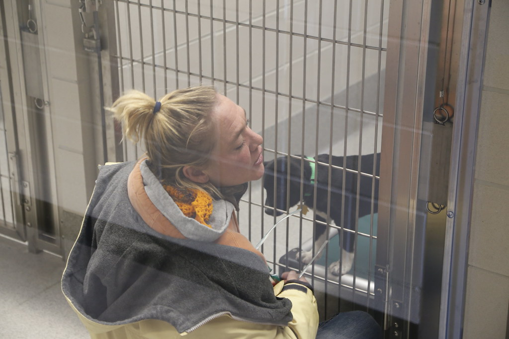 Dog Kennels In Placer County