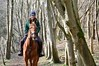 Athens Affaere (frejapetrie) Tags: frejapetriephotography frejapetrie horse chestnut equine outdoor portrait nikon d3200
