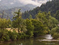 Next to the river Kupa near the village of Hrvatsko in the summer morning (MountMan Photo) Tags: rijekakupa selohrvatsko gorskikotar primorskogoranska croatia landscape magla fog flickrunitedaward
