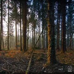 Lever de soleil à Toulfoën (EXPLORE) (stephanegachet) Tags: france bretagne finistère finistere quimperle cloharscarnoët clohars forest foret stephanegachet gachet nature