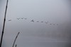 Geese in the fog (bschl) Tags: 1200s 135mm canoneos650d efs18135mmf3556isstm img5030cr2