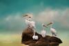 Party On The Rocks (ShutterByMe) Tags: animal beak bird birds feather ocean onocrotalus painterly pelecanidae pelecanus pelican sea texture water waterfowl white wild wildlife wing wings ngc