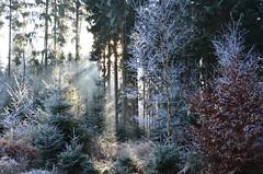 DSC_5762 im frostigen Märchenwald - In the frosty fairy tale forest (baerli08ww) Tags: deutschland germany rheinlandpfalz rhinelandpalatinate westerwald westerforest wald forest winter raureif hoarfrost