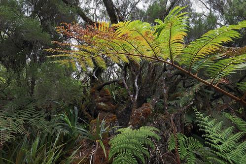 La Réunion - Forêt de Bébour-Bélouve