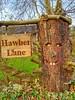 Happy Tree (tubblesnap) Tags: motorola motog3 mobile cellphone smartphone photography wood carving swartha brunthwaite house sign tree funny amusing hawber lane face