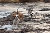 All5 (justjimwilldo) Tags: alfred archer beagleboys chickenlegs hugo portcampbell reg reggie reginald tobias toby dogs