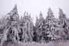 white trees (Jules Marco) Tags: schnee snow trees bäume weis white natur nature winter canon eos600d sigma1020mmf35exdchsm weitwinkel wideanglelens österreich austria niederösterreich loweraustria woodquarter waldviertel outdoor kalt cold wood forrest wald