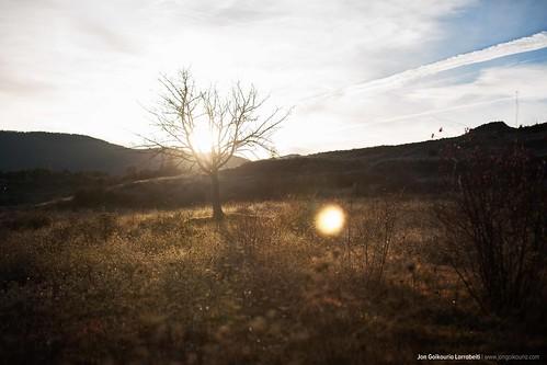 Last Tree.