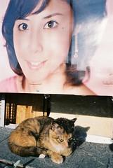 松たか子とネコ