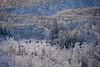 Braeburn Elk Crossing the Valley (MIKOFOX ⌘ Show Your EXIF!) Tags: canada elk showyourexif winter yukon xt2 frost landscape hills braeburnhill burn provia fujifilmxt2 valley mikofox snow november xf18135mmf3556rlmoiswr animals wildlife