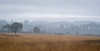 Thursley Common, Surrey (gillian.pullinger) Tags: thursleycommon surrey heath landscape winter fog mist countryside