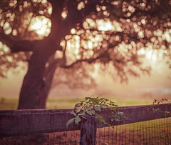 Country Morning (macromary) Tags: analog 120 120film florida fortmccoy marion county griffinranch ranch marioncounty 105mm f24 pentax 6x7 kodak iso100 ektar kodakektar mediumformat