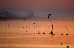 Brume (swaily ◘ Claudio Parente) Tags: maremma maremmans toscana tuscany alba sunshine nebbia fog d500 nikon nikond500 claudioparente swaily