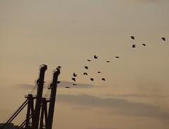 Cae la tarde en el Puerto. Sevilla (Luis MN) Tags: bandada sevilla geografíaurbana urbanismo infraestructura biogeografía urbano ciudad nubes arquitecturacivil avifauna