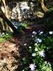 Valle dell'Orfento a primavera - Majella - Abruzzo - Italy