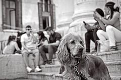 (Davide Steno) Tags: venice dog cane canon foto davide venezia bew animali animale steno davidesteno