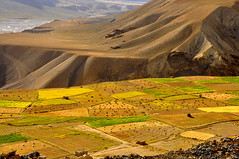 Colours of India (mala singh) Tags: autumn india mountains fields agriculture himalayas spiti himachalpradesh