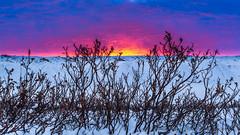 Winter Sunrise-0864 (Mathieu Dumond) Tags: canada arctic nunavut winter november snow sunrise willows sky colors mathieudumond umingmakproductions